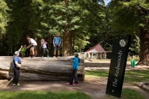 GM_Redwoods_FAMILY2-19