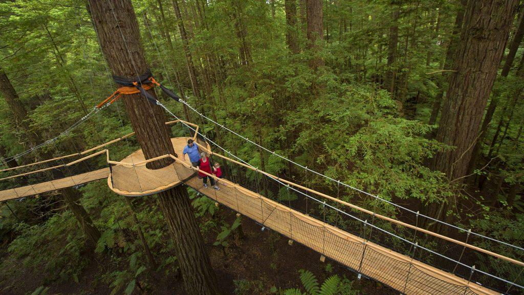 Info & Redwoods Treewalk Rotorua - The Redwoods - Whakarewarewa Forest ...